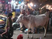 Julia + pauls trip to India