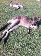 Australien2013