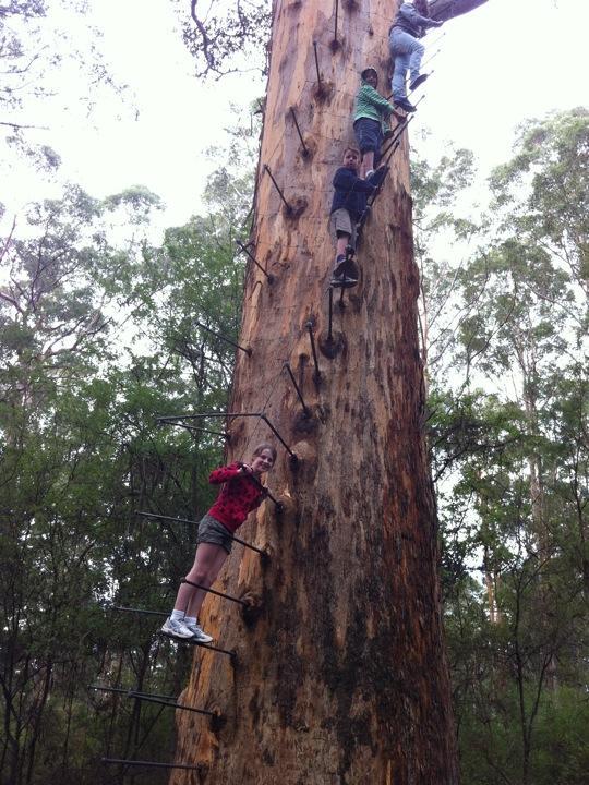 Gloucester Australia  City pictures : Blog from Gloucester Tree, Pemberton, Western Australia   Cranes ...