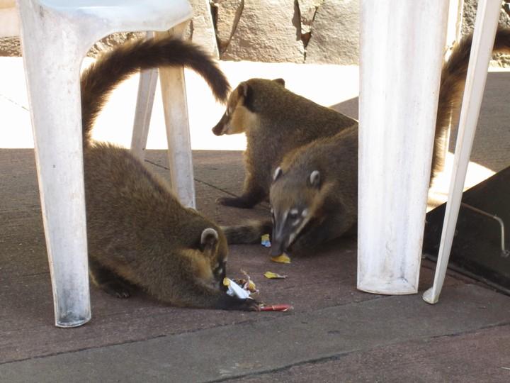Og dyrene indtog spisestedet