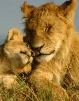 Louise og Natascha's Afrika eventyr