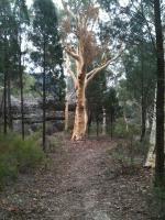 2011 Australia Trip