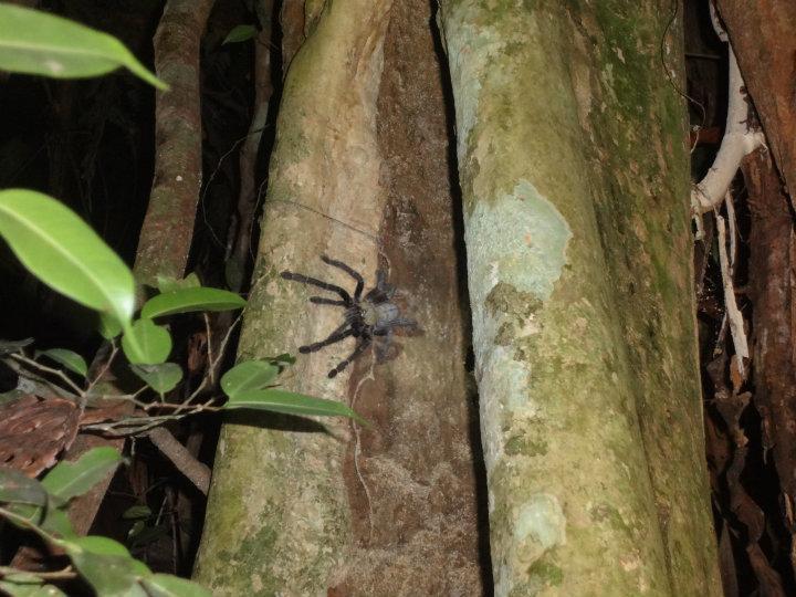 Night Safari, Taman Negara