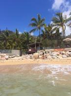 Palmsandcoconuts