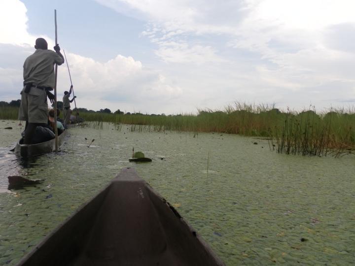 Tur med Makoro båter i Okavango Delta