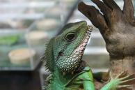 Peters Khamai reptile centre oplevelser