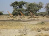 Pia's rejse til Kenya