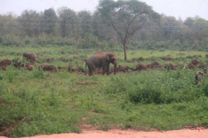 Elefant längs vägen