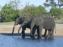 Niels og Anne i afrika
