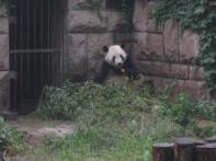 Beijing Bonanza 2011