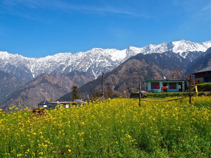Palampur India  City new picture : Blog from Palampur, Himachal Pradesh, India   Henry & SongHi's World ...