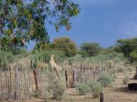 Zofia i Namibia