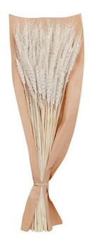 Dekorativni buket Bleached Wheat 16 x 56 cm