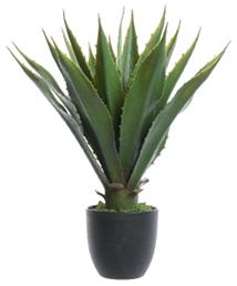 Biljka u saksiji Agava 40 x 55 cm