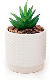 Biljka u posudi Succulent 7 x 12 cm više boja