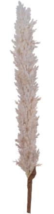 Dekorativna grana Pampas 7 x 103 cm