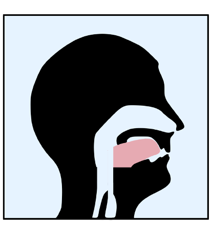 Your tongue should touch the roof of your mouth so that the airway has plenty of room for breathing.