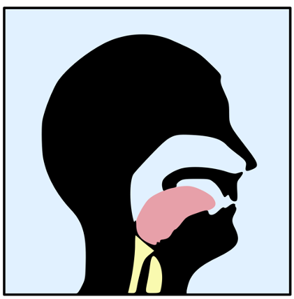 If your tongue is too far back in your throat, you block the airway and make it harder to breathe through your nose, contributing to sleep apnea and snoring.