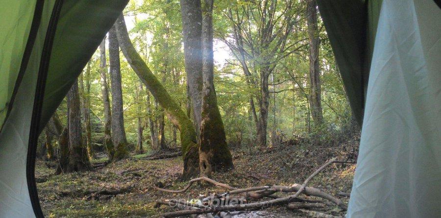 iğneada longoz ormanları kamp