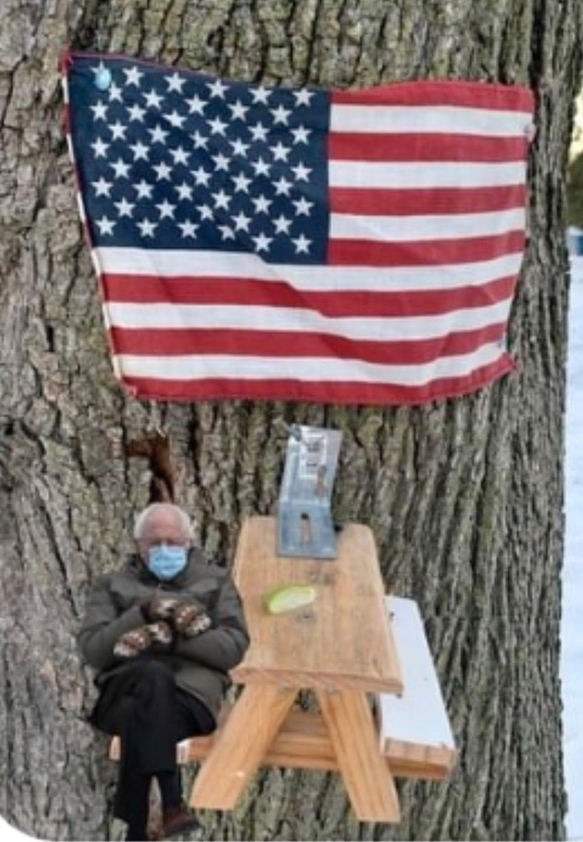 Squirrel picnic table with Bernie