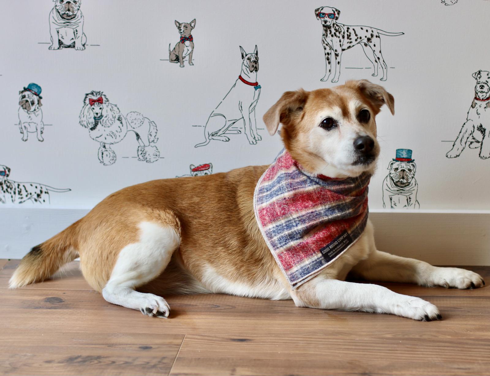 Riley the dog