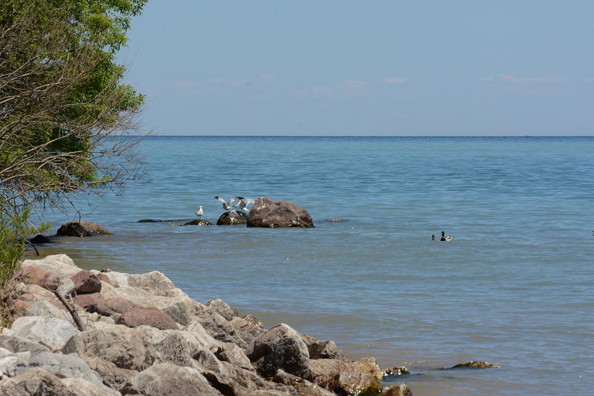 summerfest rocks