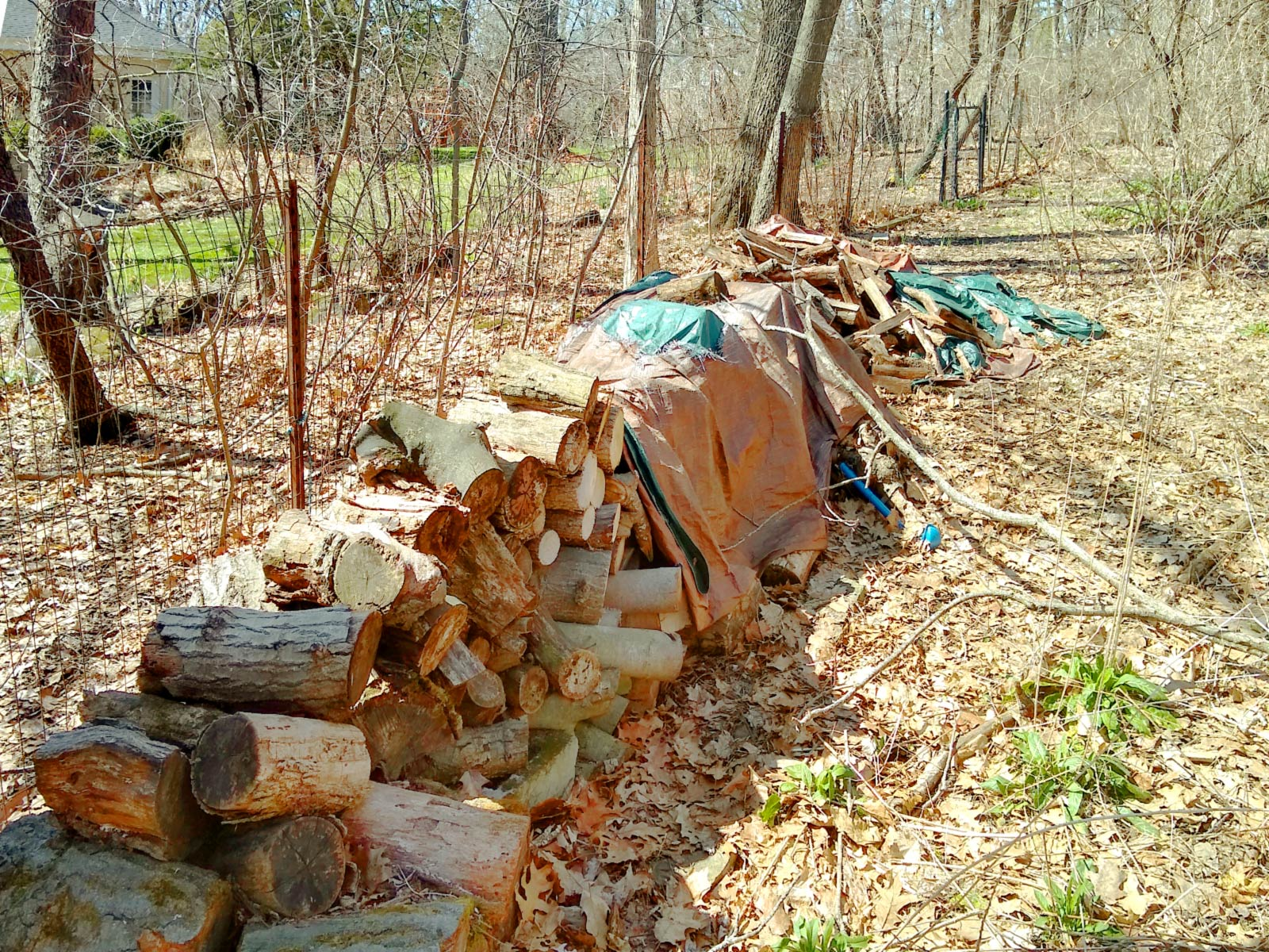 A pile of firewood stored on public land.