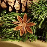 Kerstversiering uit de natuur - IVN