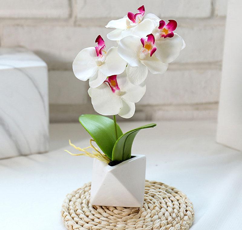 Hoa lan tôn lên nét cao sang, quý phái.