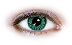 2 Tone Green (N222) Contact Lenses