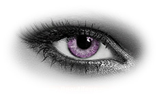 Soleko Queens Solitaire Violet Contact Lenses