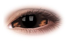 Morbius 22mm Sclera | Brown Contact Lenses