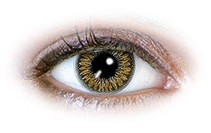 2 Tone Brown (N224) | Quarterly Contact Lenses
