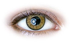 Honey (N238) | Natural Color Contact Lenses