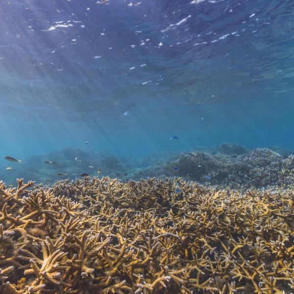 NMSAS - Healthy Coral