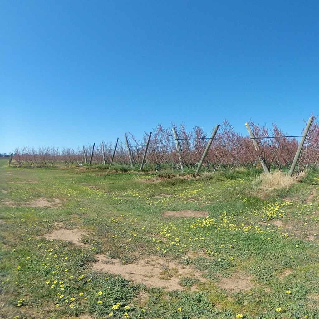Irrigation trials - North end of orchard