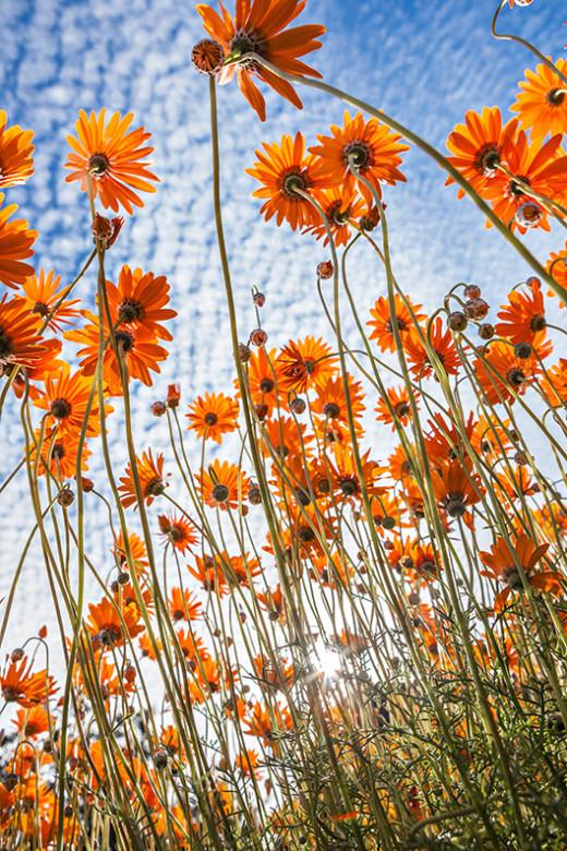A8_HC Jacques Kloppers_Flower Swarm