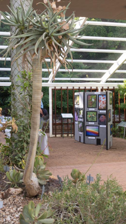 Kirstenbosch 03