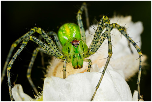 October A_HC Mike Wrankmore_Lynx Spider