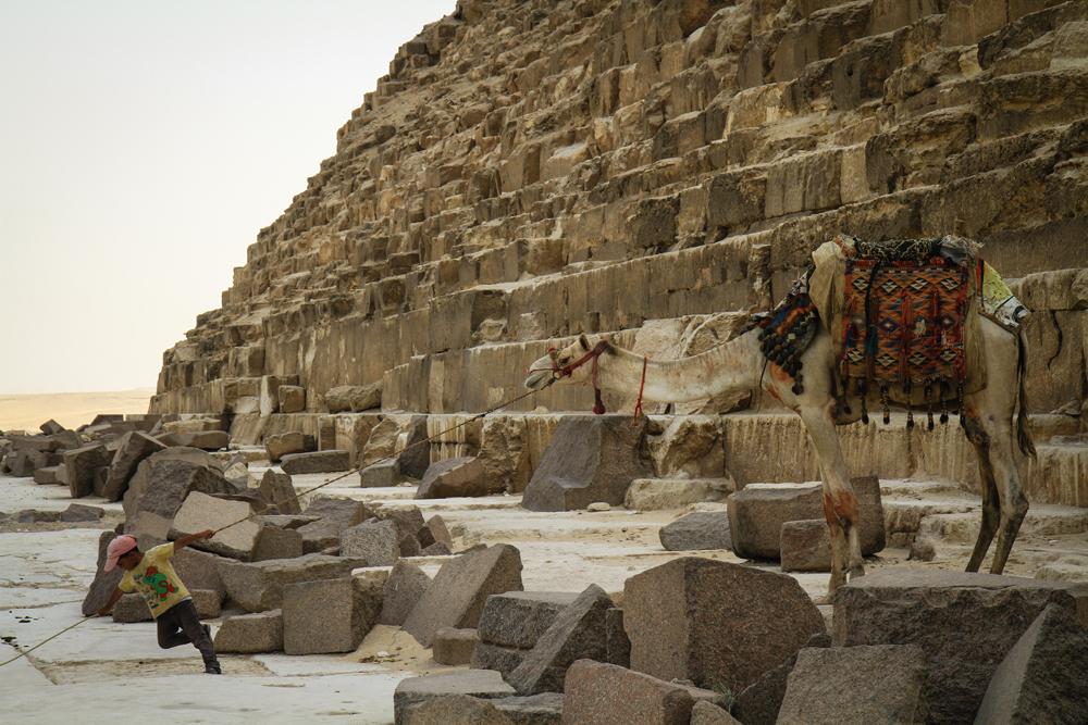 Giza Boy Pulling Camel copy EGYPT