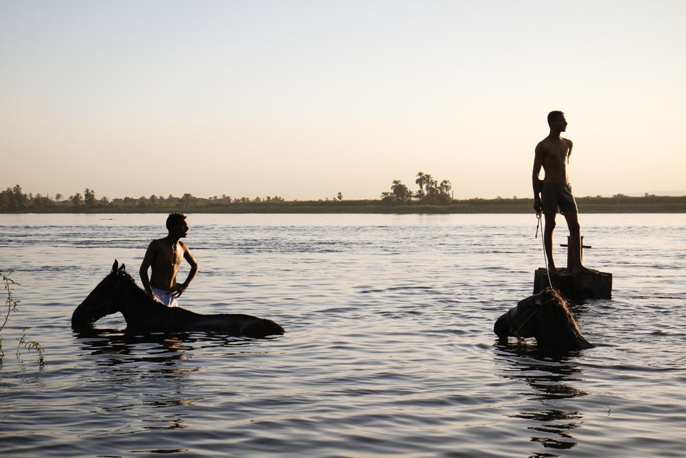 Luxor Horses Swim Young Men Sunset EGYPT