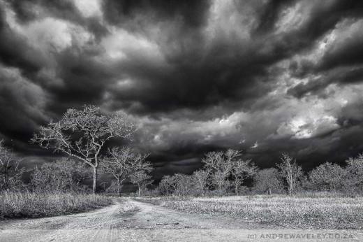 Bushveld Monochrome