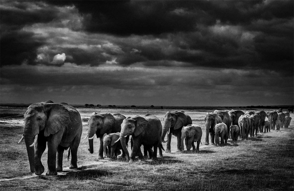 Laurent Baheux High Contrast Wildlife Photography on Orms Connect Photography Blog South Africa