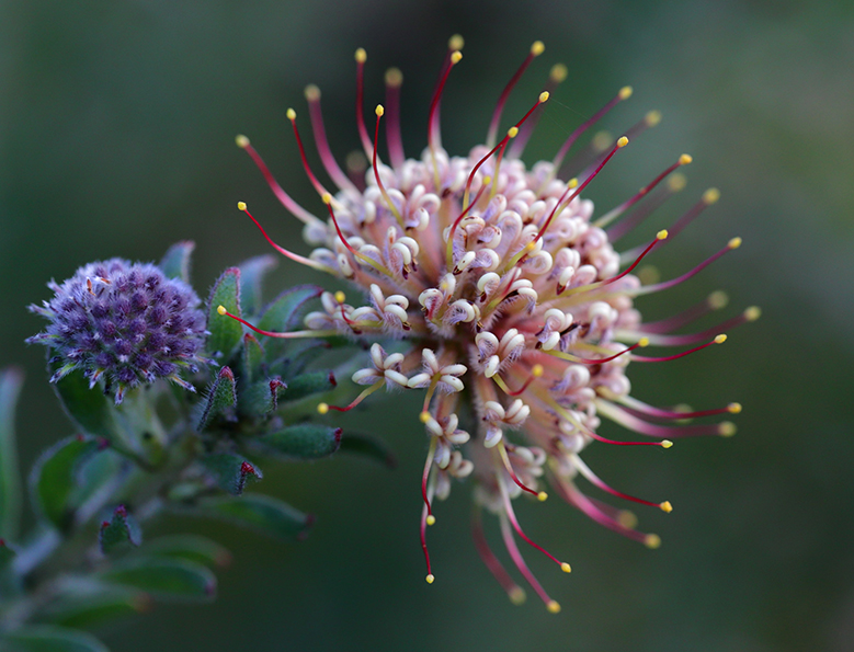Kirstenbosch 2014 Competition Results