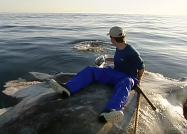 Man sitting on whale carcass with shark feeding frenzy on Orms connect photographic blog.