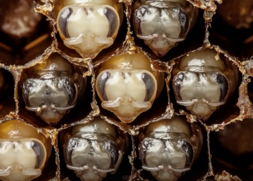 Time-lapse of Bees hatching on Orms Connect Photographic Blog, South Africa