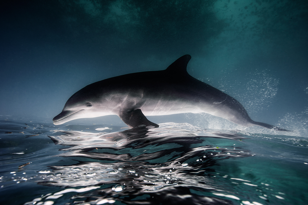 Underwater-Photography-by-Jorge-Cervera-Hauser-on-Orms-Connect-Photography-Blog-South-Africa