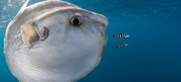 Image ©Chris Fallows | Oceans Of Life 2015 Competition by BirdLife South Africa