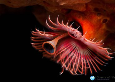 Oceans Of Life 2015 Competition by BirdLife South Africa