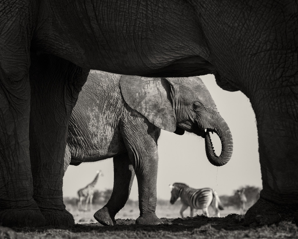 Wildlife Photographer of the Year Exhibition | Framing Everything